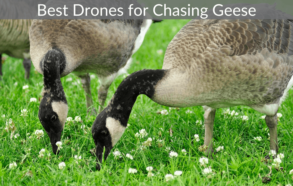 Best Drones for Chasing Geese