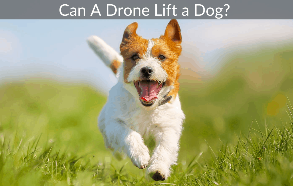 Can A Drone Lift a Dog?